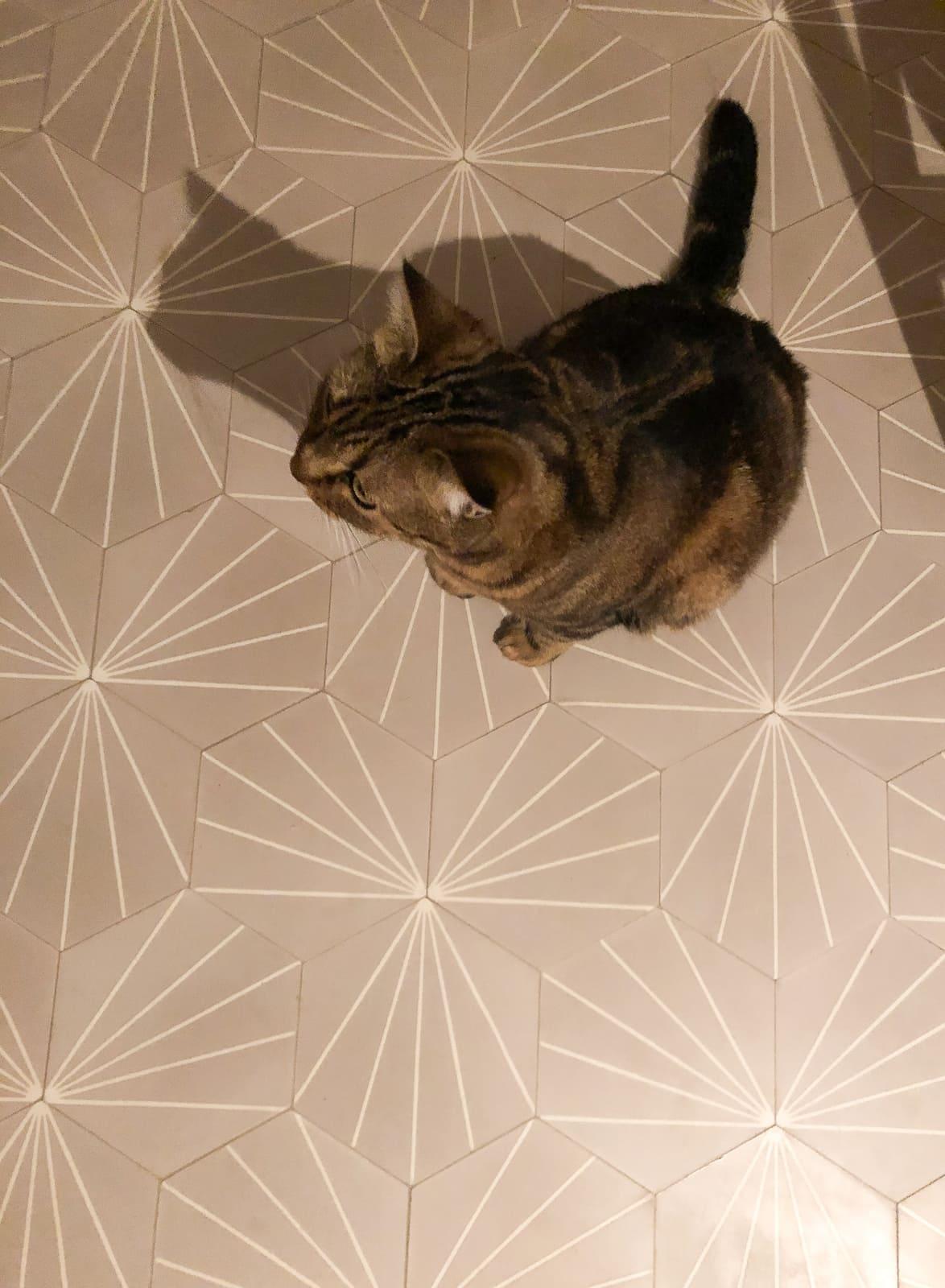 zementfliesen-viaplatten-zementmosaikplatte-sechseck-nr.600852 | 600852